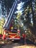 Gleitschirmflieger im Baum am 11.04.2016